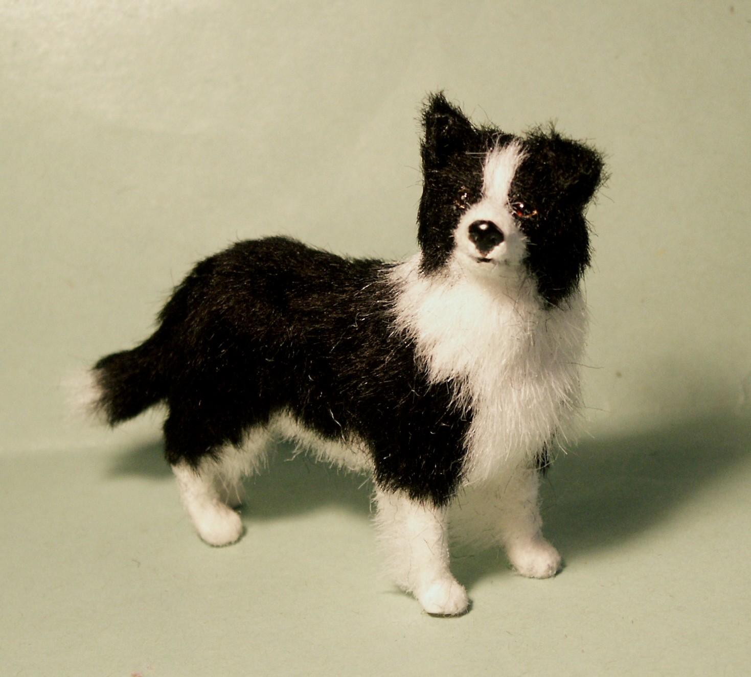 Miniature Border Collie | Dog Breeds Picture